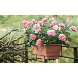 Emsa bac à fleurs aqua comfort lago, (l)500 mm, terracotta